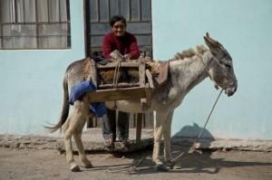 Peruvian Woman Donkey